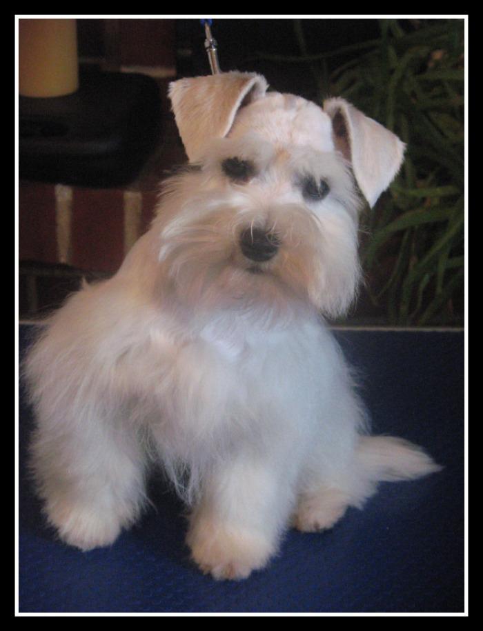 beautie-pup