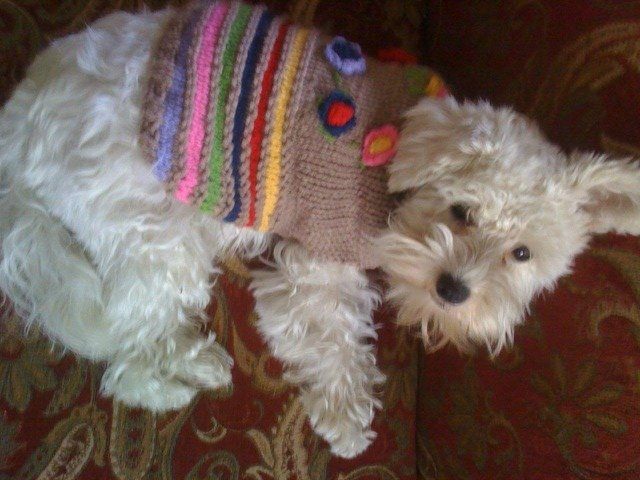 bella-with-sweater