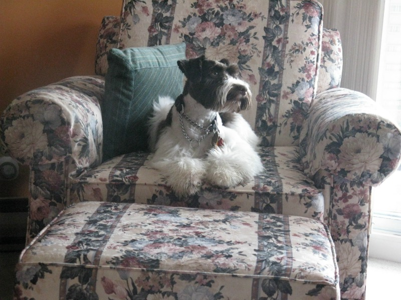 brutus-in-chair