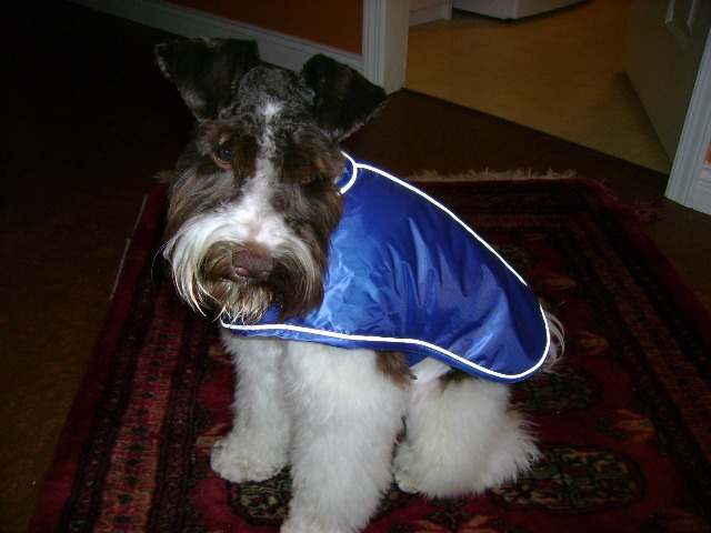 brutus-with-raincoat