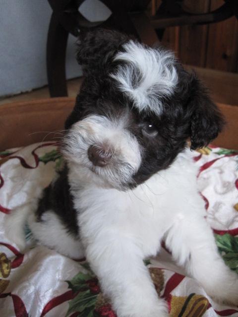 claire-and-cash-male-pup1-face-closeup