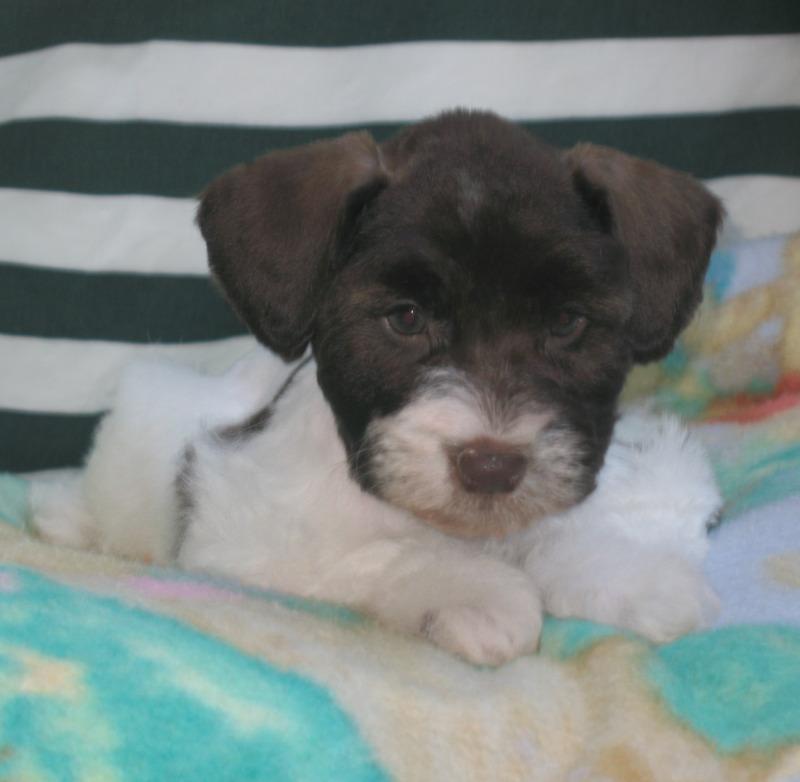 female-puppy-july-28th