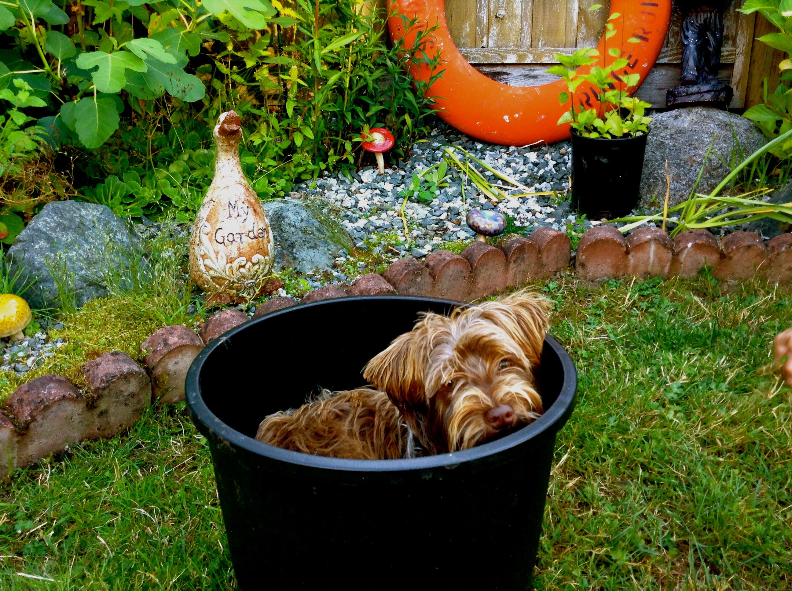 garden puppy