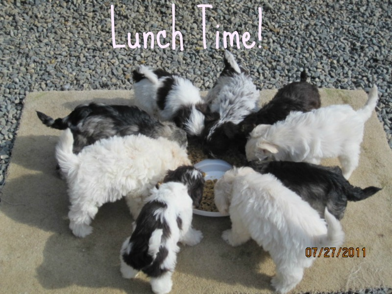 lunch-time