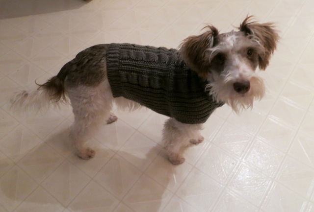 new-sweater1