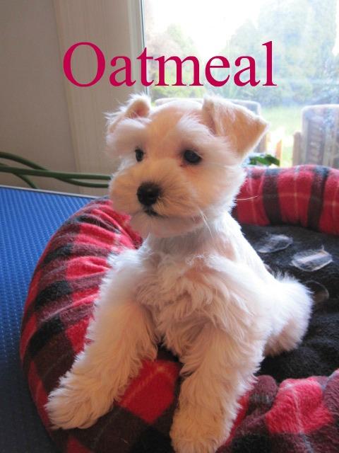 oatmeal-sitting-cute