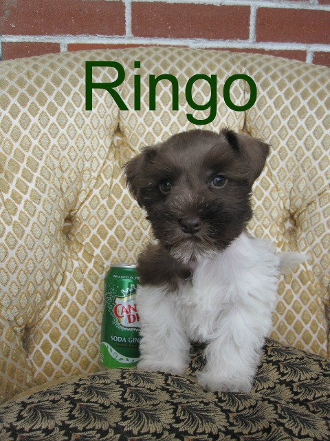 ringo-sitting1-text