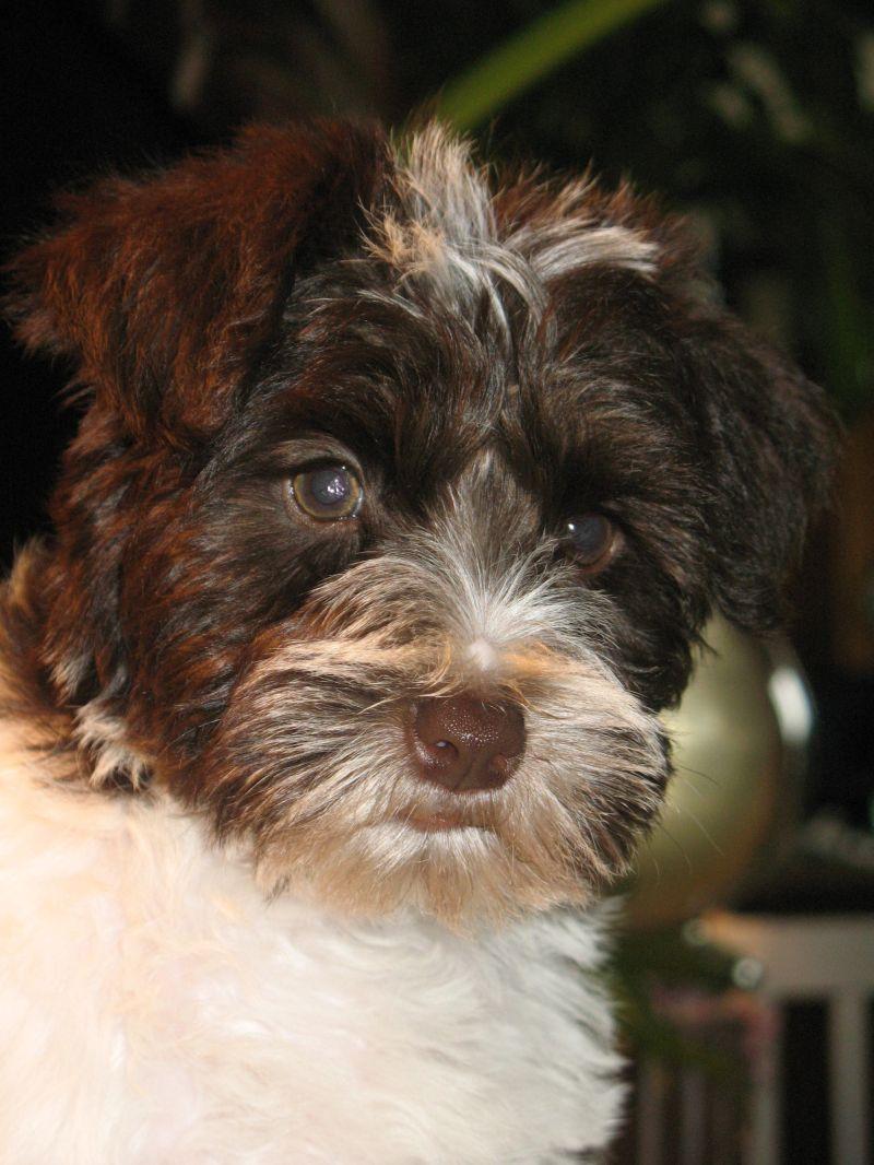 third-litter-puppy1