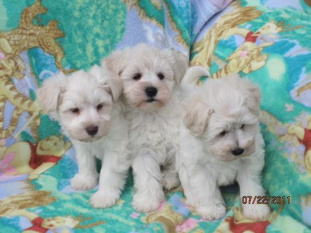 three-white-brothers