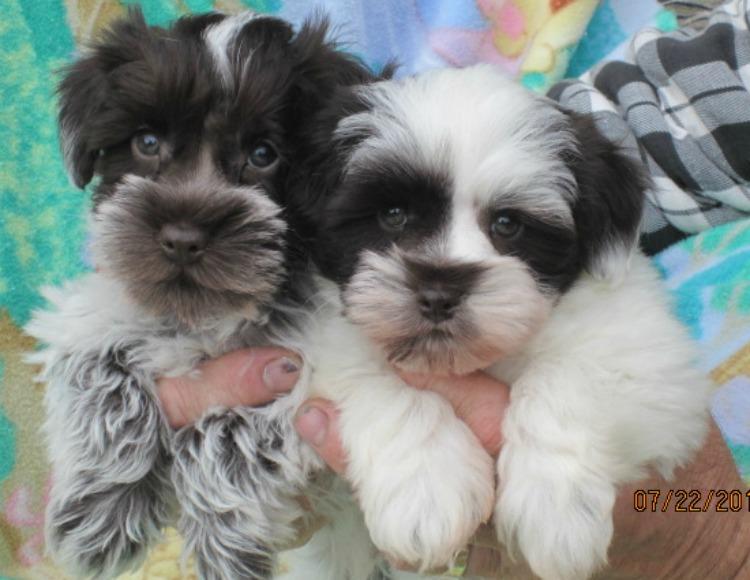 tobys-pups