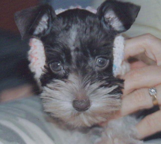 toy-puppy1